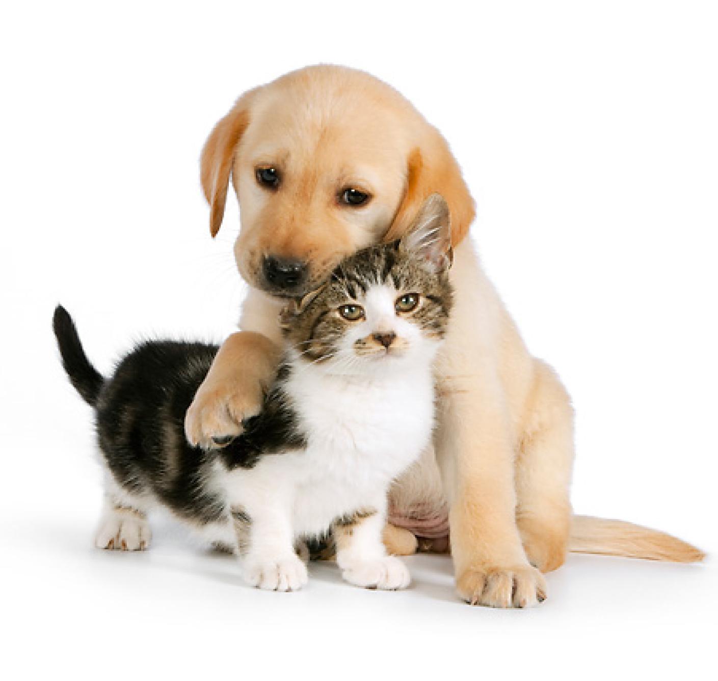Znalezione obrazy dla zapytania zbiórka dla zwierząt ze schroniska
